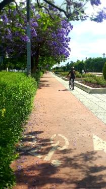 Vial Norte de Córdoba